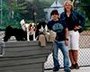 WCAI Provincetown's dog park